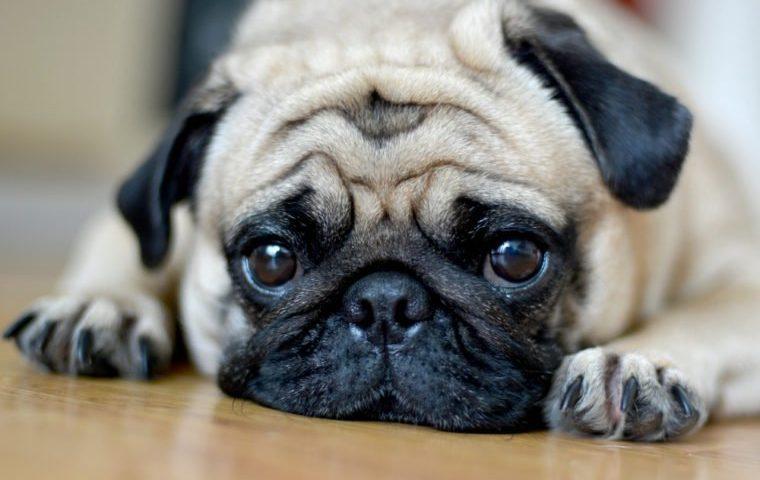 Sterbehilfe für Haustiere